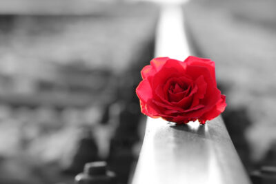 Red rose on a railing with black and white backround