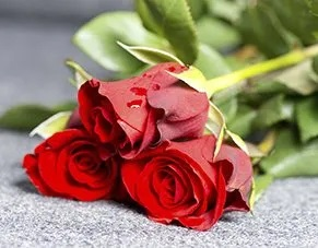 Red roses laying on a hard surface